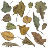 手拉的干燥秋叶的传染媒介汇集 皇族释放例证
