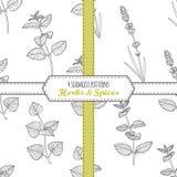 手拉的无缝的样式收藏用蜜蜂花,薄菏,淡紫色,紫苏 免版税库存照片