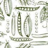 手拉的无缝的样式用豌豆 免版税库存照片