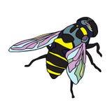 手拉的昆虫传染媒介杂文象例证 库存图片