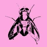 手拉的昆虫传染媒介杂文象例证 免版税库存照片