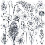 手拉的春天花和植物的汇集 库存例证