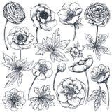 手拉的春天花和植物的汇集 皇族释放例证