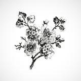 手拉的枝杈有花葡萄酒背景 图库摄影