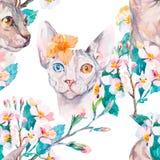 手拉的样式典雅的Sphynx猫和热带花 猫时尚画象  狮身人面象 可用的背景黑色蓝色生长留给模式红色春天数据条向量空白宽 开花 免版税图库摄影