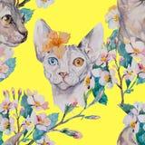 手拉的样式典雅的Sphynx猫和热带花 猫时尚画象  狮身人面象 可用的背景黑色蓝色生长留给模式红色春天数据条向量空白宽 开花 库存照片