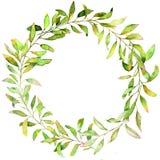 手拉的水彩例证 绿色分支和叶子植物的花圈  库存图片