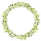 手拉的水彩例证 绿色分支和叶子植物的花圈  免版税库存图片