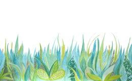 手拉的水彩植物的例证 蓝色和绿草 库存例证