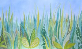 手拉的水彩植物的背景 蓝色和绿草 库存照片
