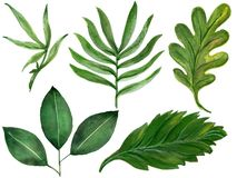 手拉的水彩热带植物设置了异乎寻常的叶子手dra 库存例证