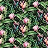 手拉的水彩热带鸟火鸟无缝的样式 异乎寻常的玫瑰色鸟例证,密林树,巴西 库存例证