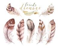 手拉的水彩绘画充满活力的羽毛集合 Boho样式翼 例证被隔绝的ont白色 鸟飞行设计 皇族释放例证