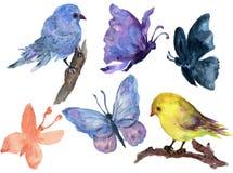 手拉的水彩绘画充满活力的蝴蝶和鸟羽毛集合Boho颜色样式翼水彩画羽毛背景的 向量例证