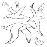 手拉的海燕 传染媒介剪影例证 免版税库存图片