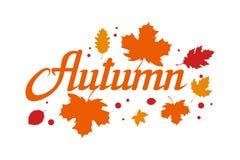 手拉的秋天字法,色的秋天概念隔绝在白色背景,秋叶,模板的彩色插图 库存例证