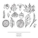 手拉的秋天美好的套叶子,花、分支、蘑菇和莓果,隔绝在白色背景 黑色白色 免版税库存照片