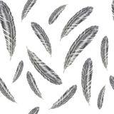 手拉的羽毛例证 在白色背景的羽毛样式 免版税库存图片