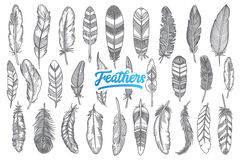 手拉的羽毛设置与蓝色字法 向量例证