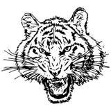 手拉的老虎头 免版税库存照片