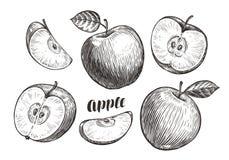 手拉的苹果和切片,剪影 果子概念 葡萄酒传染媒介例证 向量例证