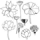 手拉的莲花 传染媒介剪影例证 免版税库存照片