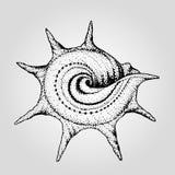 手拉的葡萄酒圆的海壳 免版税库存图片