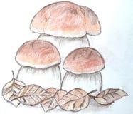 手拉的蘑菇 免版税库存照片