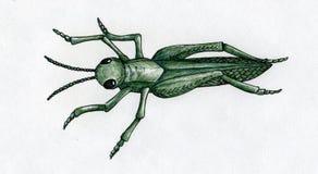 手拉的蚂蚱 免版税库存图片