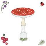 手拉的蛤蟆菌蘑菇 免版税库存照片