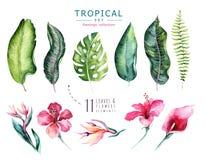 手拉的被设置的水彩热带植物 异乎寻常的棕榈叶、密林树、巴西热带植物学元素和花 库存照片