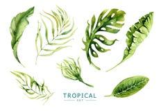 手拉的被设置的水彩热带植物 异乎寻常的棕榈叶, j 库存图片