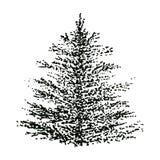 手拉的被隔绝的对象黑白照片冷杉木 免版税库存图片