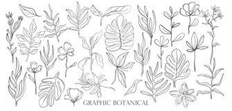 手拉的集合剪影样式野花 线自然样式,图画植物群,手拉的植物学 向量例证