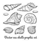 手拉的贝壳收藏 免版税库存照片