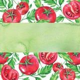手拉的水平的横幅用水彩红色蕃茄和叶子在白色背景 库存图片