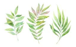 手拉的水彩例证 春天叶子和分支 皇族释放例证
