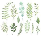 手拉的水彩例证 植物的clipart 套g