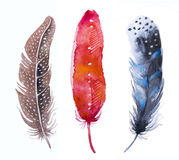 手拉的水彩充满活力的羽毛集合 向量例证
