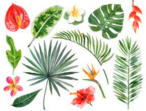 手拉的水彩热带植物 图库摄影
