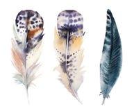手拉的水彩羽毛集合,光栅 库存图片