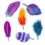 手拉的水彩羽毛集合 向量例证