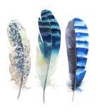 手拉的水彩羽毛集合 Boho样式 例证isol 免版税库存照片