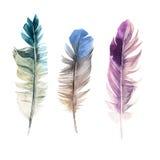手拉的水彩羽毛 向量例证