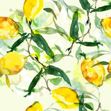 手拉的水彩绘画柠檬 免版税库存照片