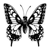 手拉的蝴蝶 免版税库存图片