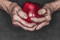 手拿着一个红色苹果 免版税库存图片