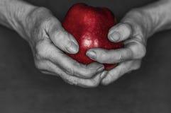 手拿着一个红色苹果 图库摄影