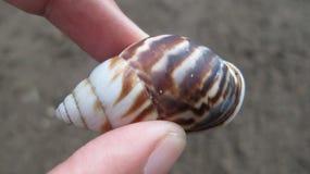手拿着小蜗牛 免版税库存图片