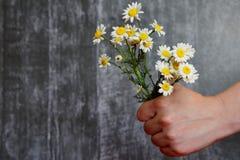 手拿着春黄菊花束  免版税库存图片